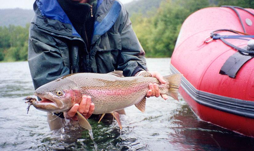 Красная рыба: виды, список названий, особенности, ареал обитания