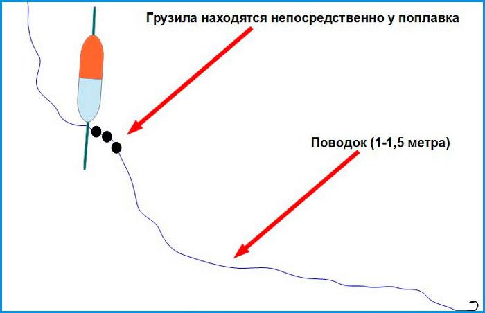 2668_club-fish-ru_1