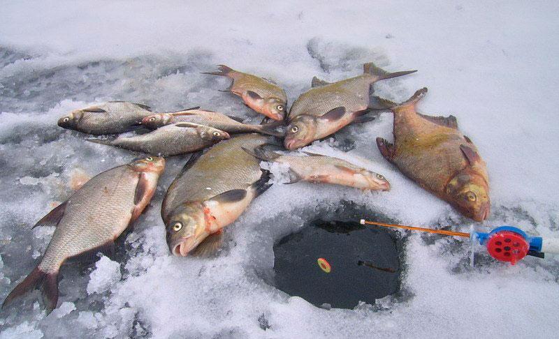 Удочка для зимней рыбалки своими руками