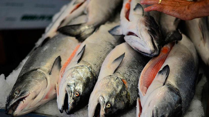 Чем отличается семга от лосося?