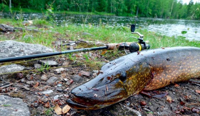 rybalka-v-okrestnostyax-muroma-mesta-sposoby-lovli-otzyvy1